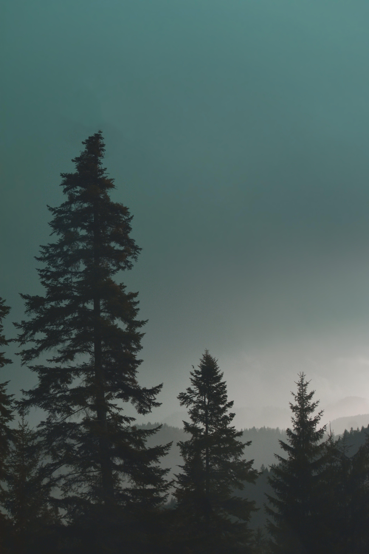 HD 바탕화면, 고요한, 나무, 목가적인의 무료 스톡 사진