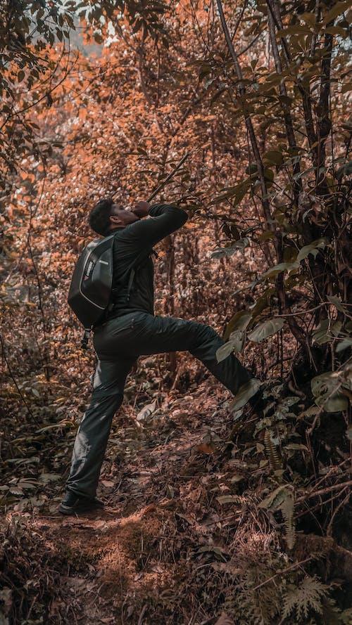 Бесплатное стоковое фото с dainese, гималаи, гора, джунгли