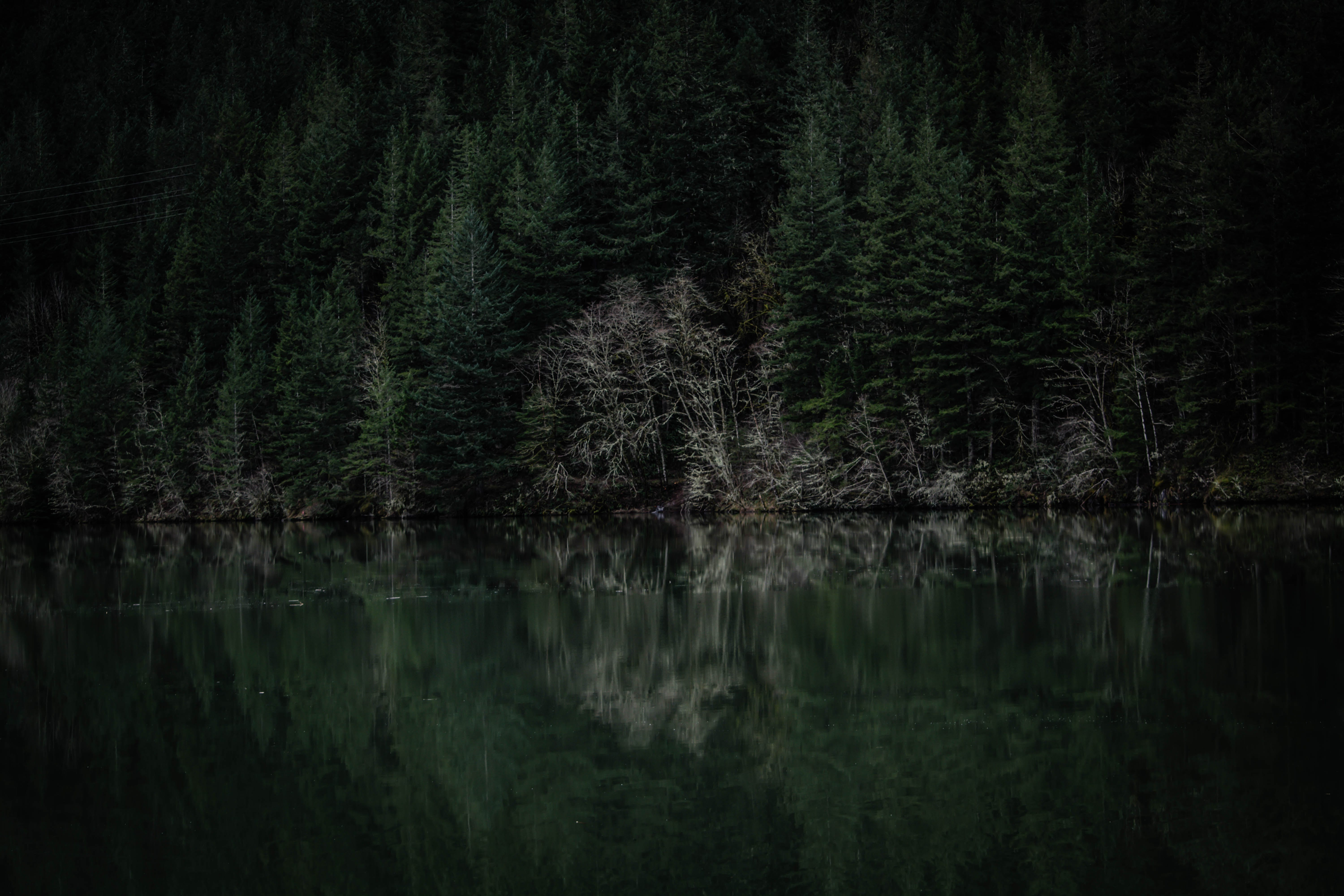 Body of Water and Pine Trees