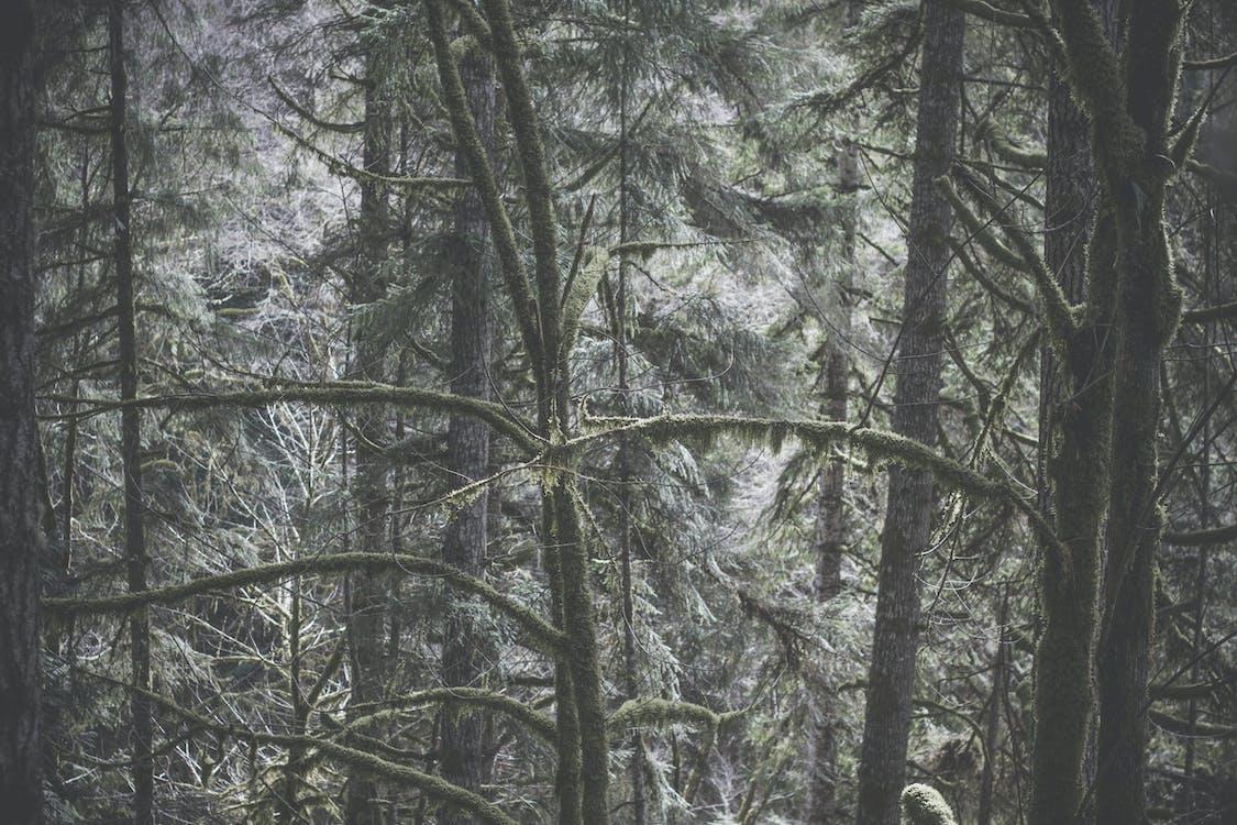 árvores, filiais, floresta