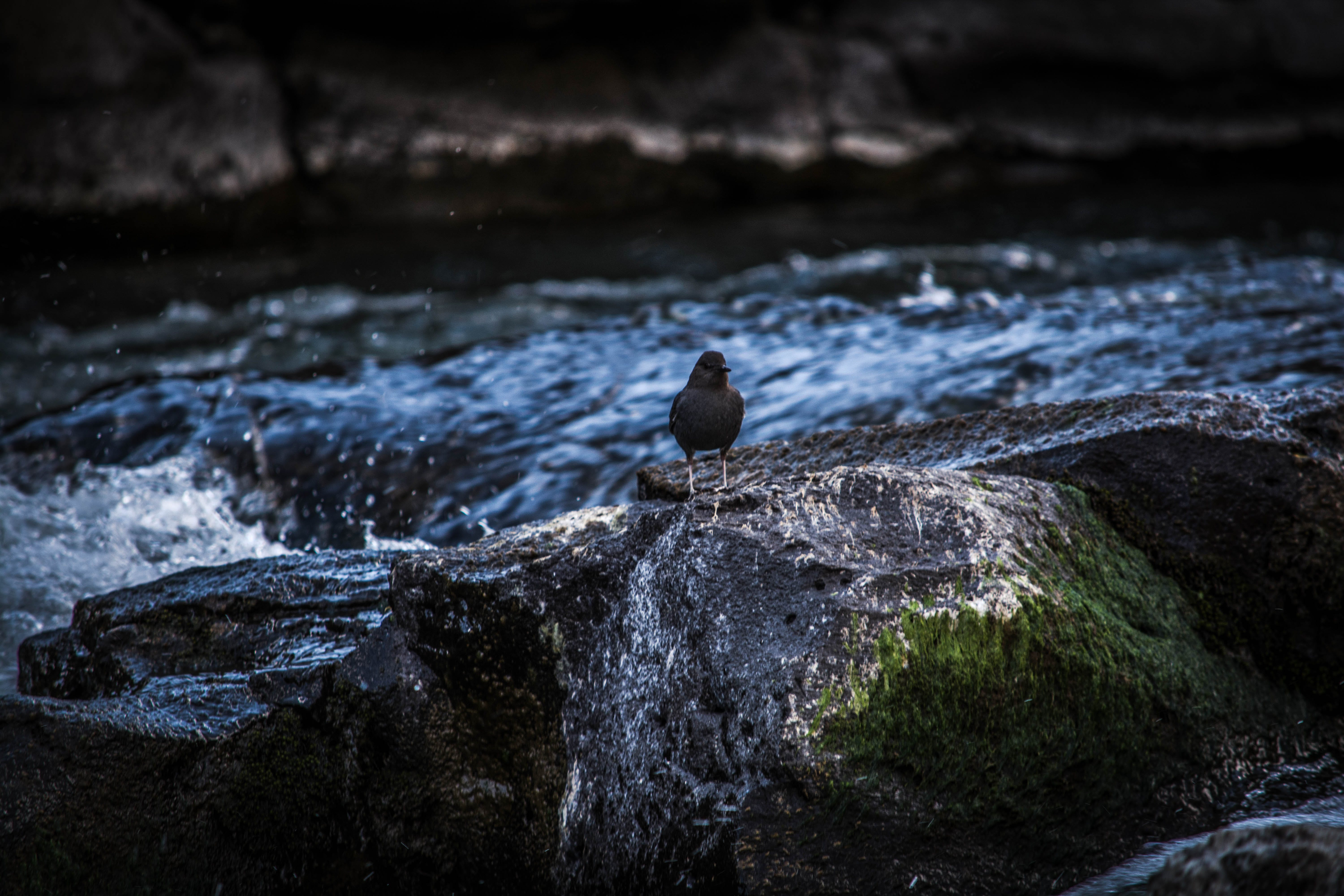 Selective Focus Photography of Bird Perching on Rock