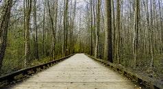 wood, landscape, nature
