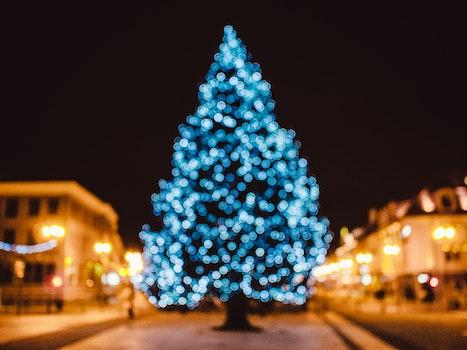 Free stock photo of blur, bokeh, christmas, christmas tree