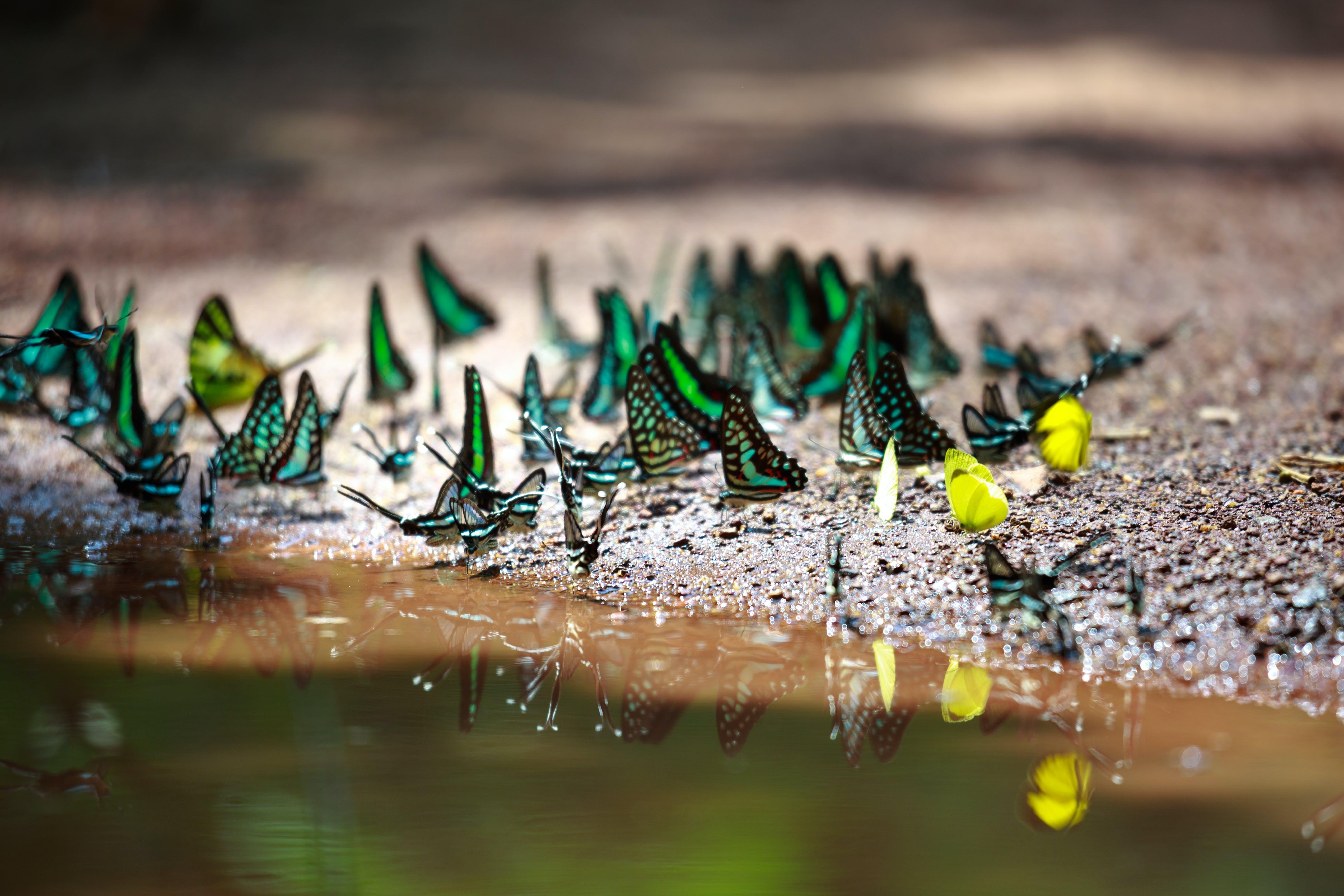 Butterflies on Sand