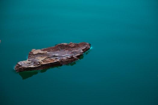 Free stock photo of water, bark, float