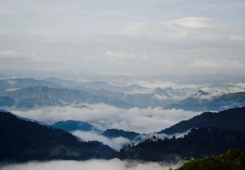 Ilmainen kuvapankkikuva tunnisteilla Intia, kerala, luonto