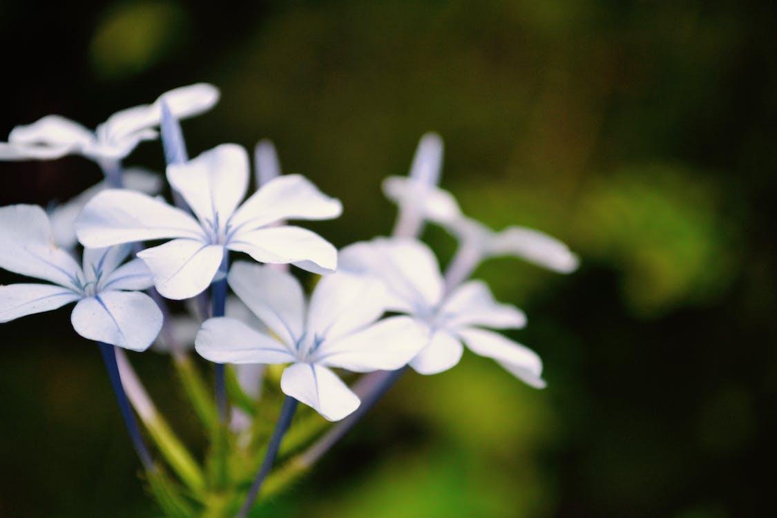 Gratis lagerfoto af blomster, lilla