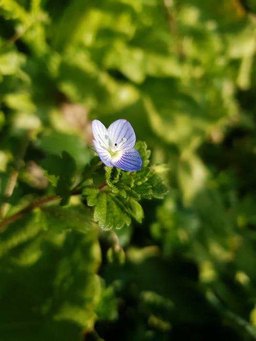 Ingyenes stockfotó kék virág, virág témában