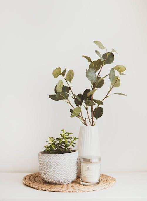 Immagine gratuita di bellissimo, botanico, candela, crescita