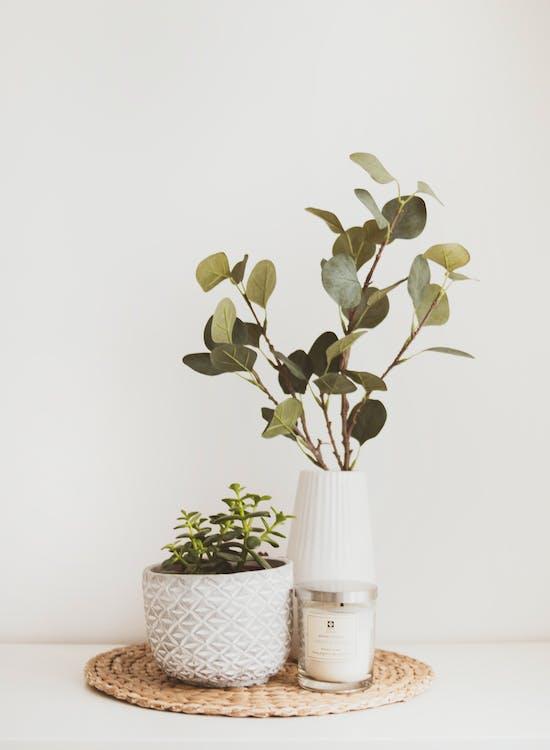 Two White Flower Vases