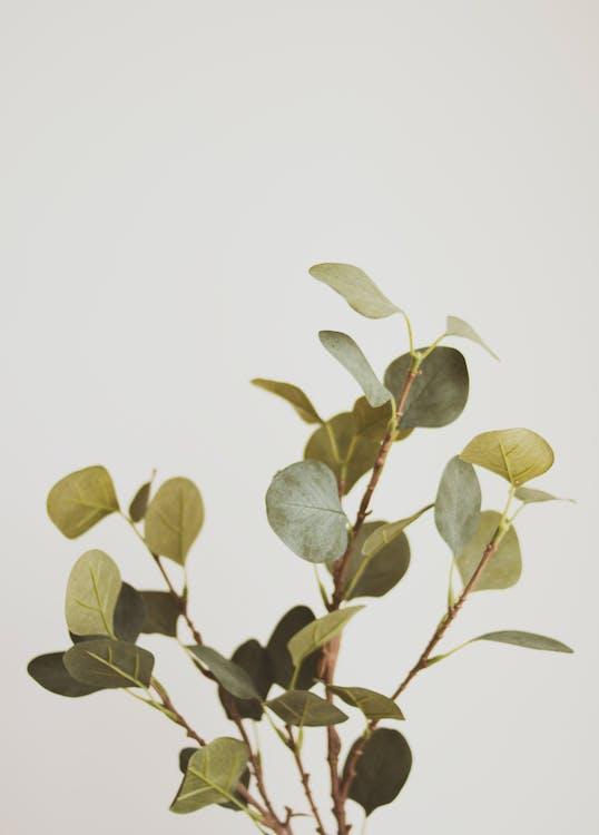 botánico, crecimiento, Fresco