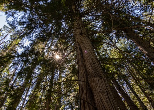 Foto profissional grátis de alto, árvore, árvore alta, árvores altas