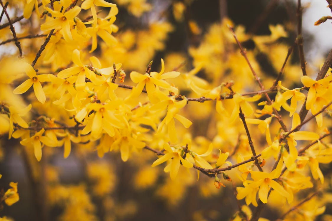 Selective Focus Photography of Yellow-petaled Flower Tree