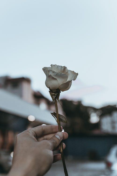 Darmowe zdjęcie z galerii z biały kwiat, bokeh, delikatny, głębia pola