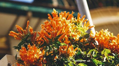Imagine de stoc gratuită din floră, flori, înflorire, plantă
