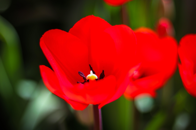 Gratis lagerfoto af blomster, blomstrende, farve, farverig