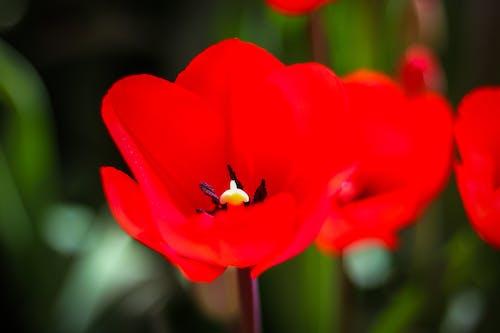 Gratis arkivbilde med årstid, blomster, blomsterblad, farge