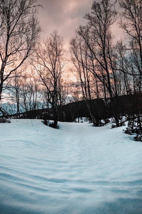 Bare Trees on Snow