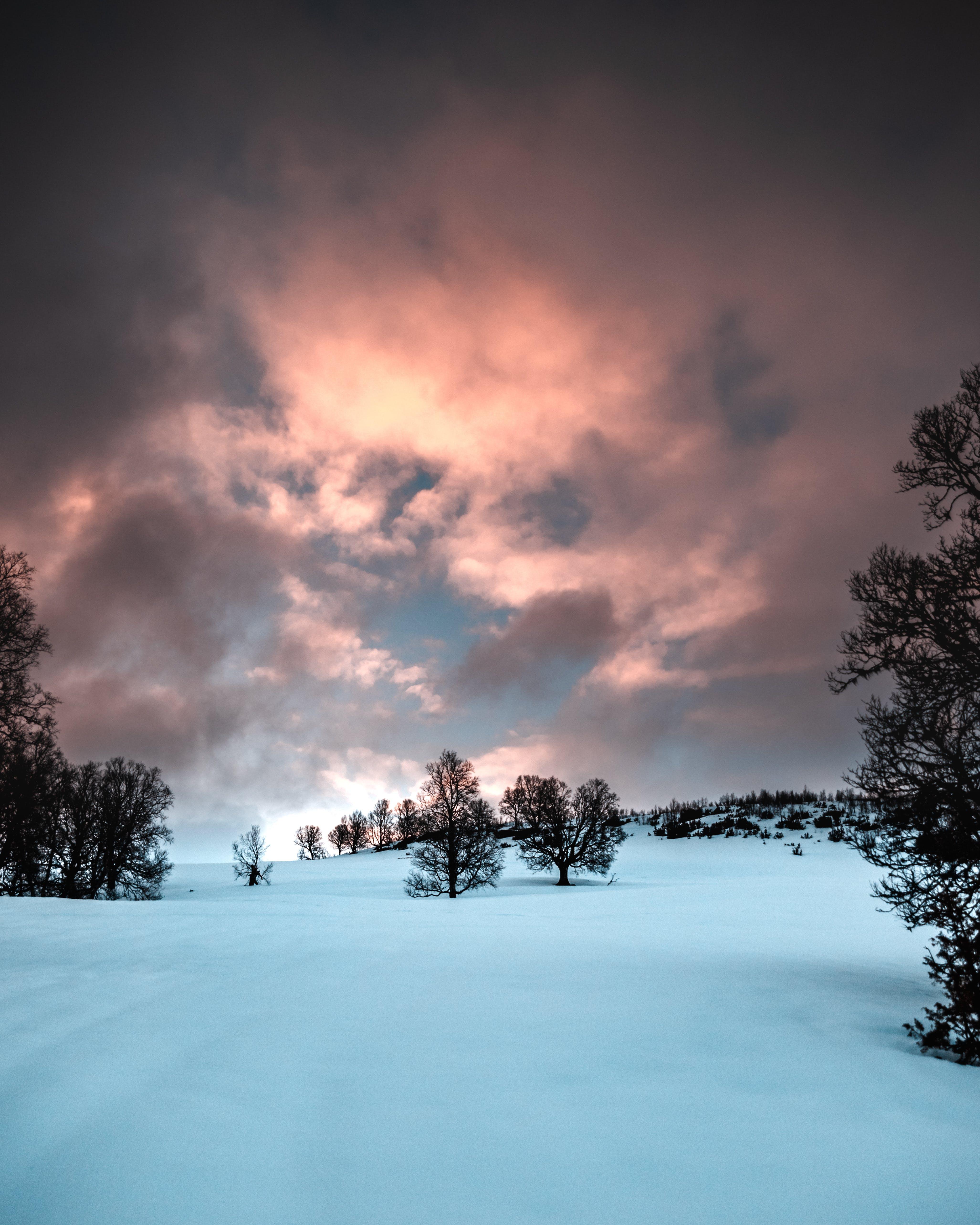 Бесплатное стоковое фото с деревья, живописный, закат, зима