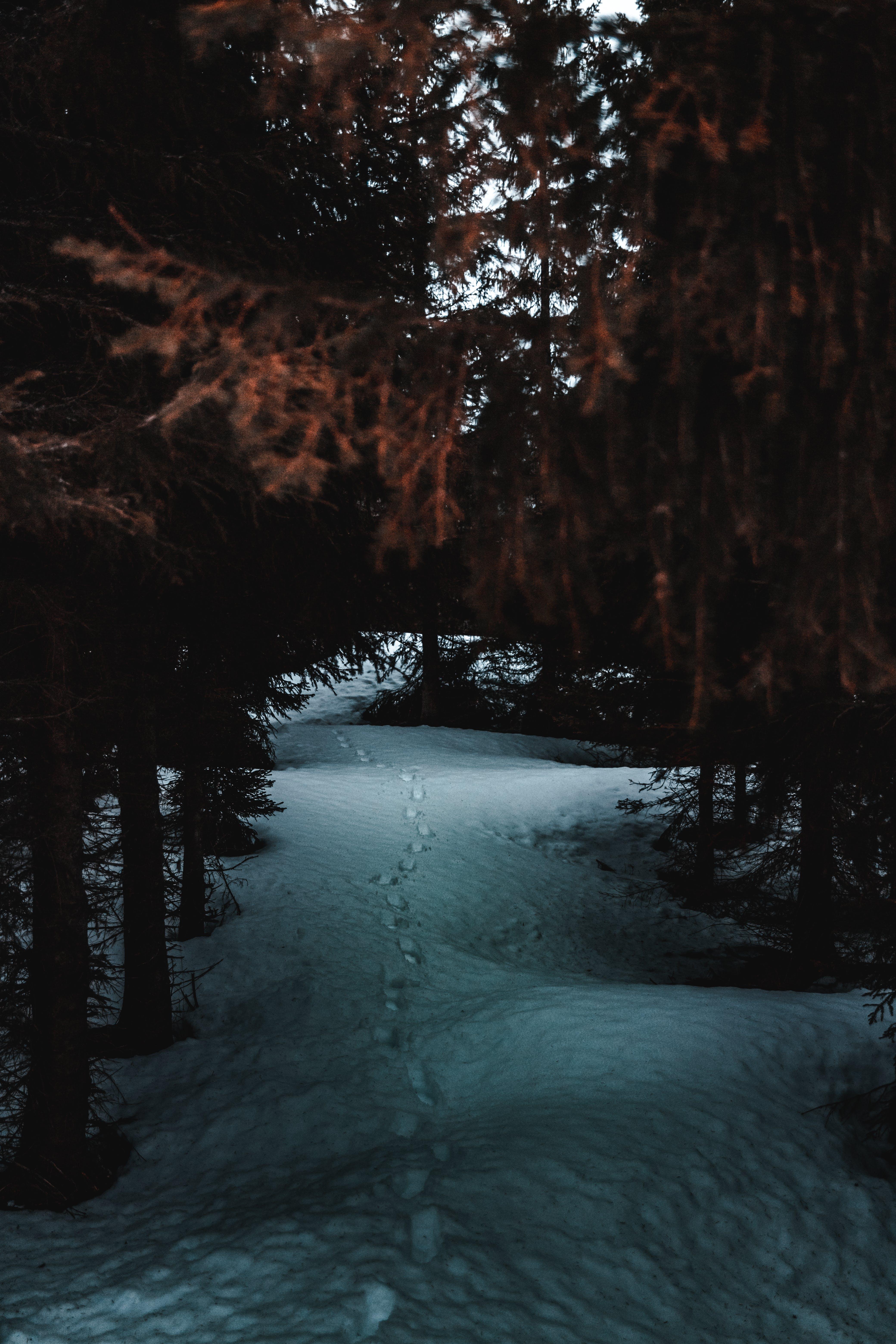 Photos gratuites de arbres, couvert de neige, enneigé, environnement