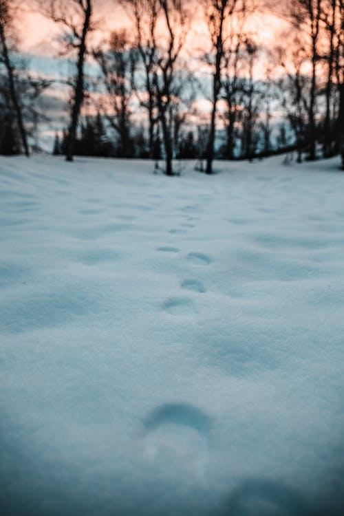 drzewa, krajobraz, lód
