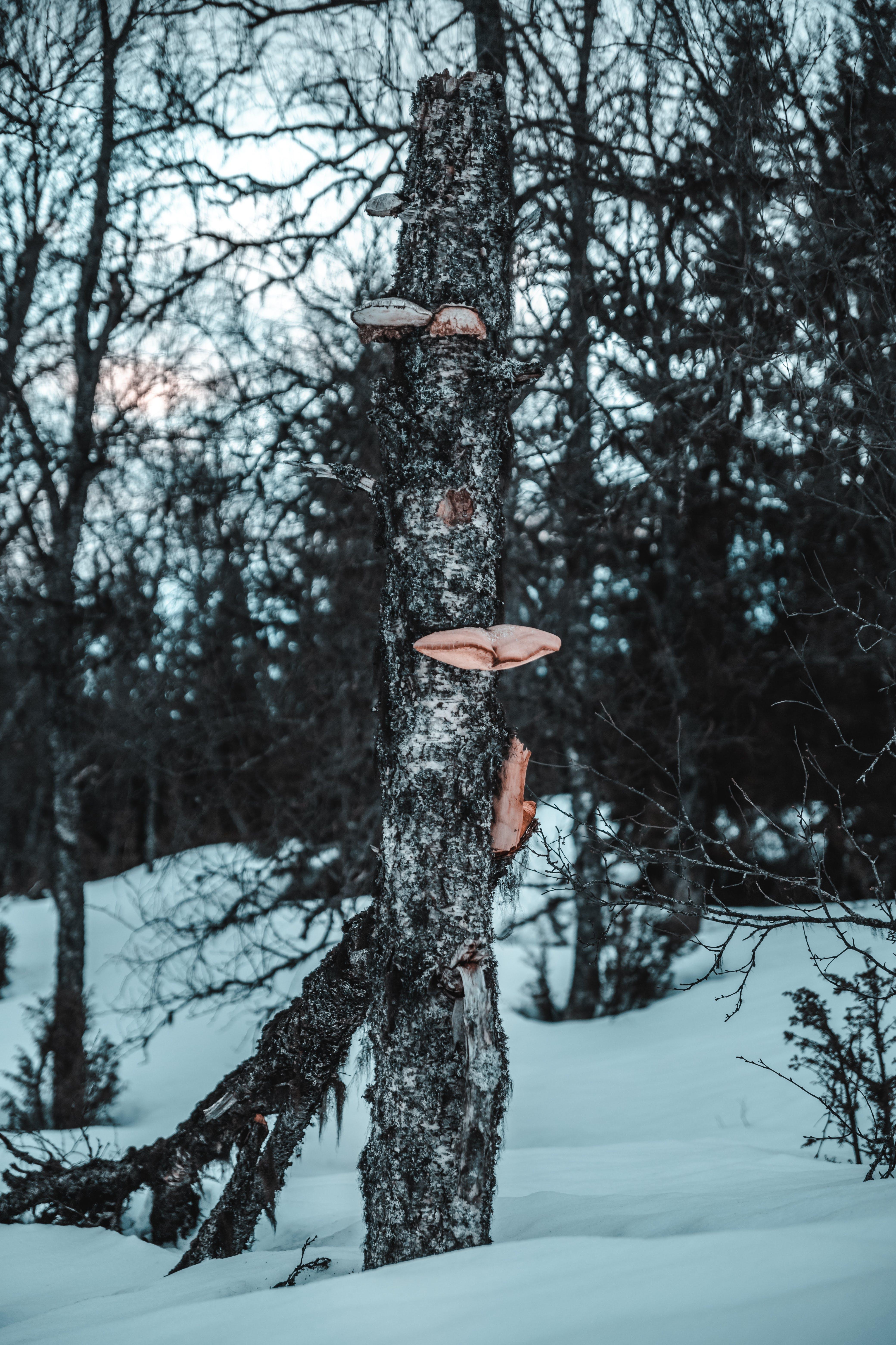 Photos gratuites de aboiement, arbre nu, arbres, arbres tombés