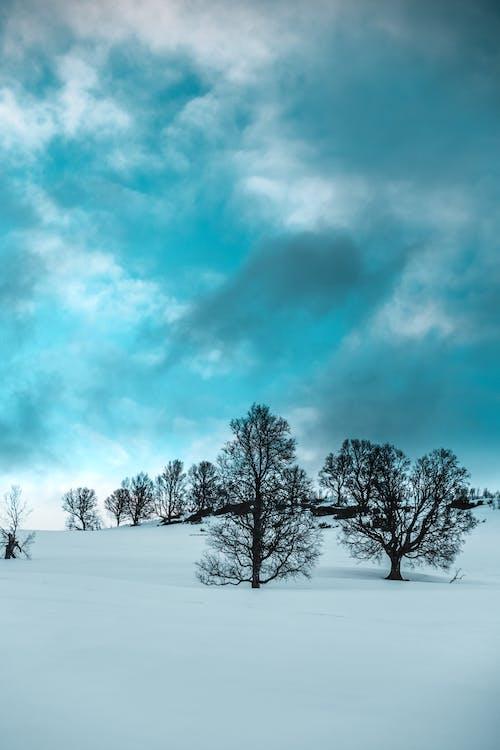 alberi, ambiente, cielo
