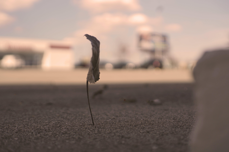 Foto d'estoc gratuïta de a6500, destrirfotografia, destruir, en calma