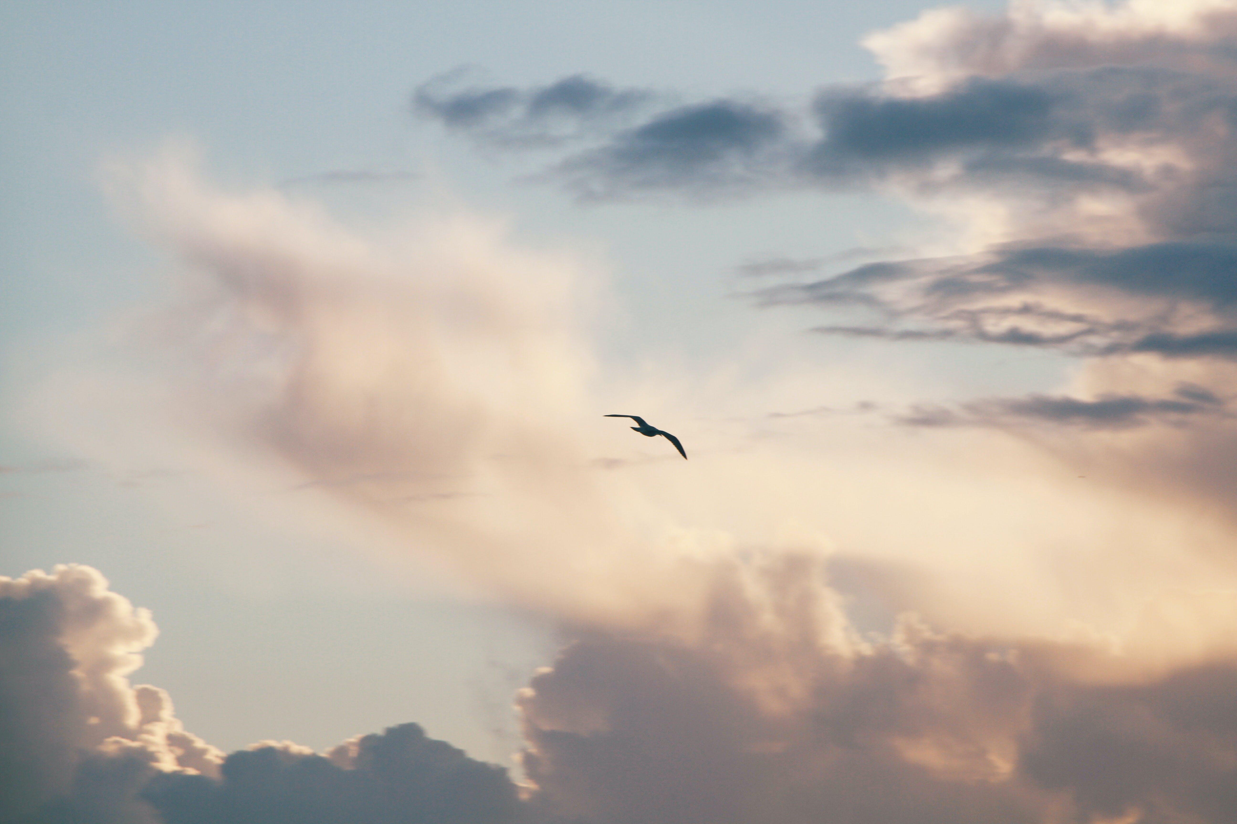 구름, 날으는, 동물, 새의 무료 스톡 사진