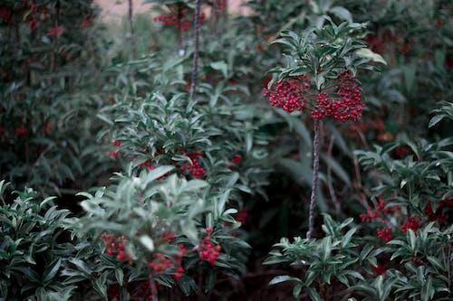 Gratis lagerfoto af natur, park, plante