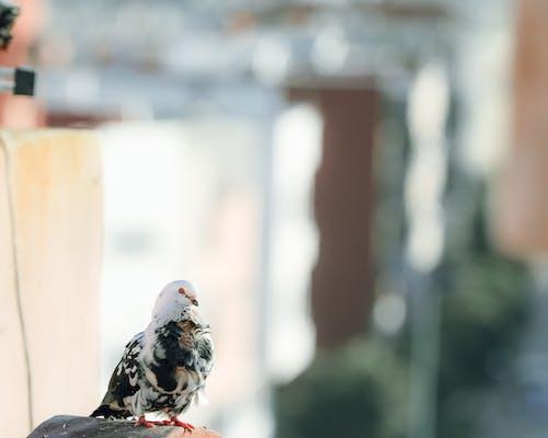 Foto d'estoc gratuïta de ales, animal, au, aviari