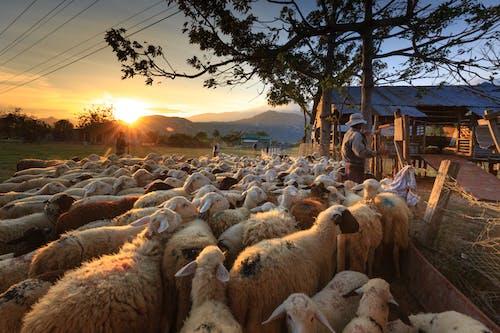 Fotos de stock gratuitas de agricultores, agricultura, al aire libre, amanecer