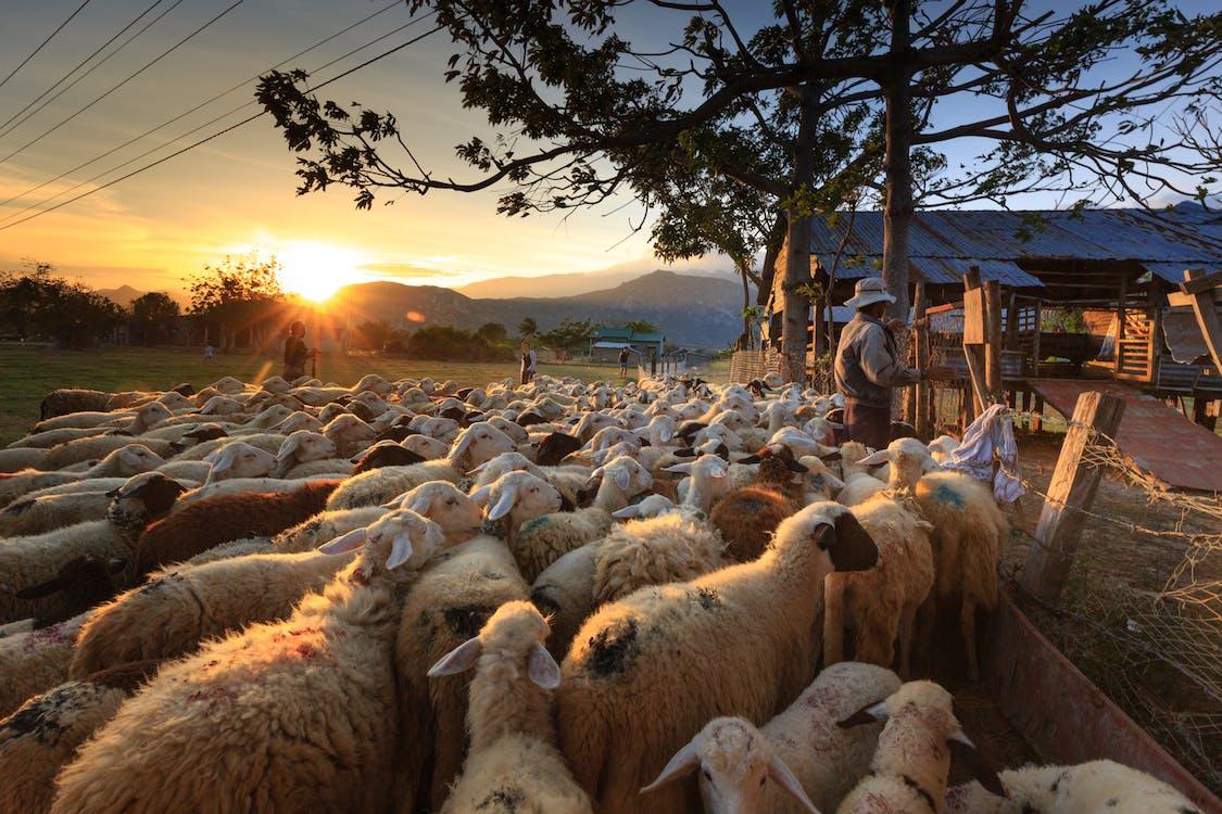 agricultores, agricultura, al aire libre