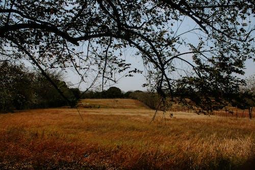 Foto stok gratis bidang, cuaca bagus, daun hijau, lansekap