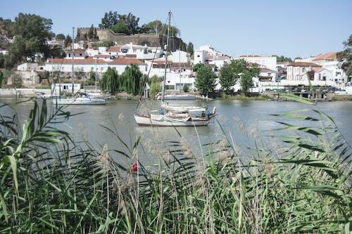 Δωρεάν στοκ φωτογραφιών με αλκαουτίν (πορτογαλία), βάρκα, βάρκες, γρασίδι