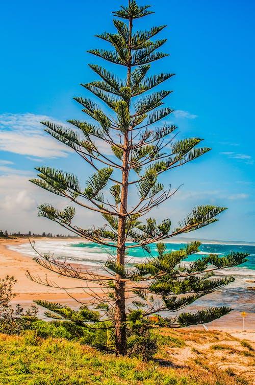 Δωρεάν στοκ φωτογραφιών με nsw, Αυστραλία, δέντρο, η είσοδος