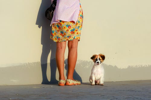 Woman in Floral Dress and Pink Cardigan Standing in Front of Brown and White Puppy