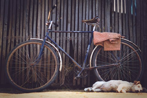 Blue Flat Bar Bike Beside Yellow Labrador Retriever