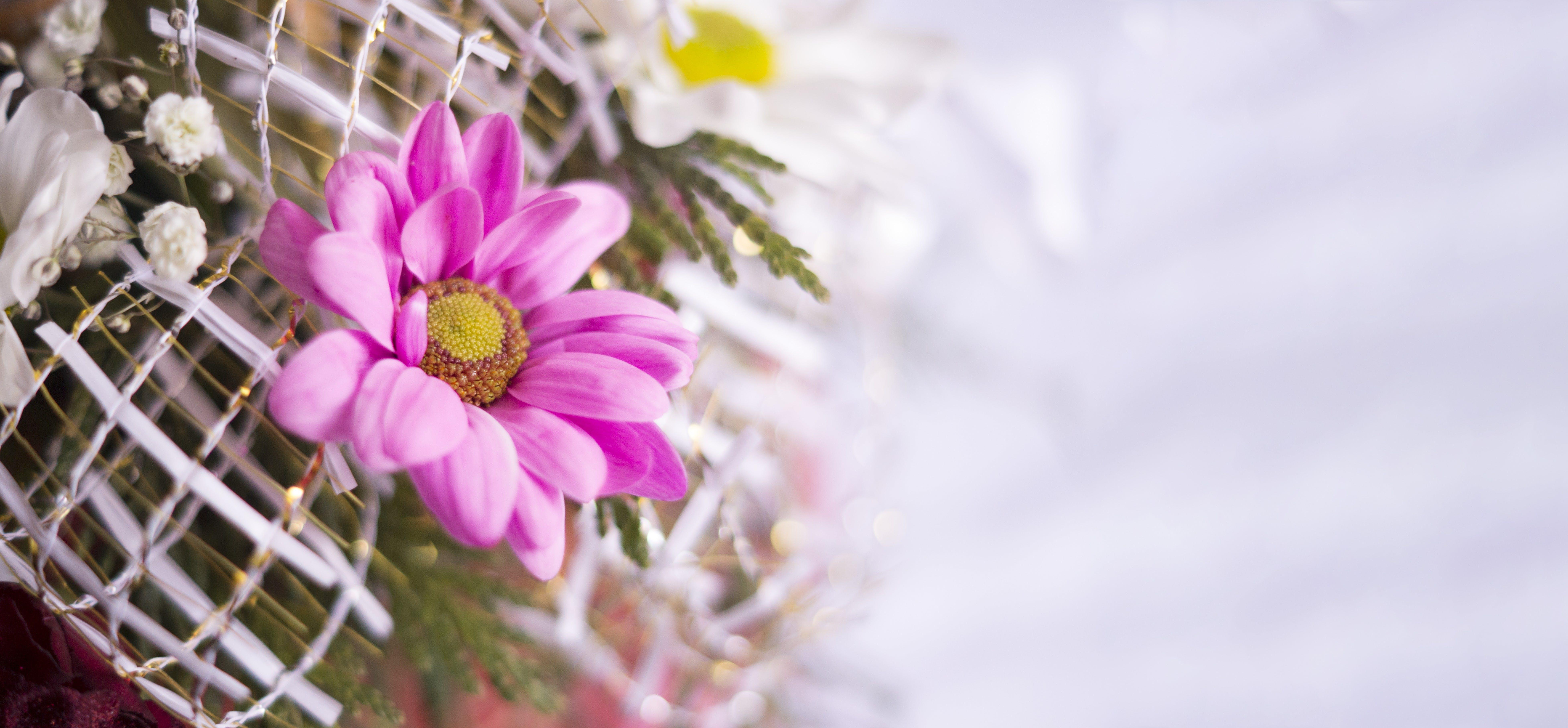 Free stock photo of background, beautiful, flower, girl