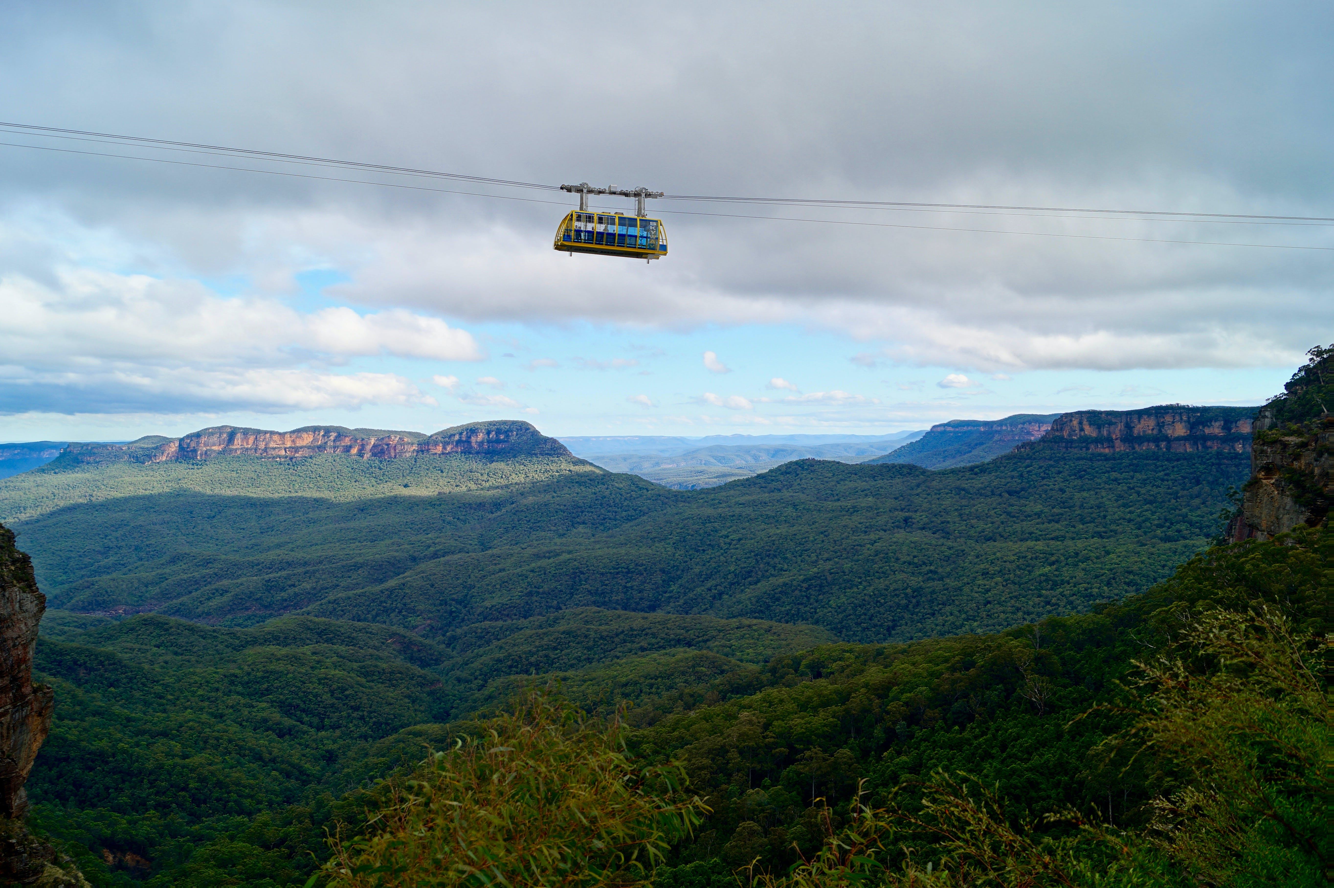 White Zip Line Bus Above on Green Leaved Trees