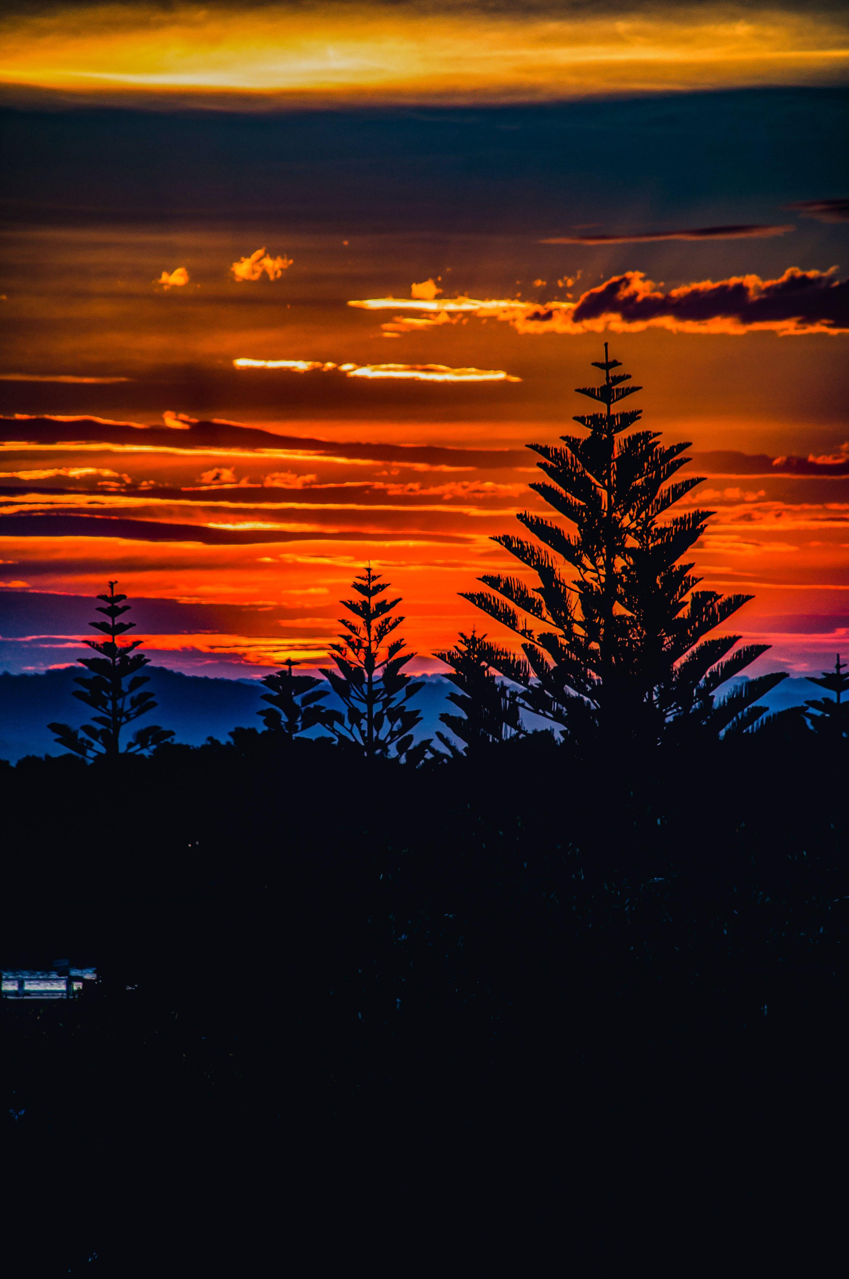 Ingyenes stockfotó alkonyat, Ausztrália, fák, hajnal témában