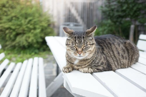 Free stock photo of animal, bench, cat, cats