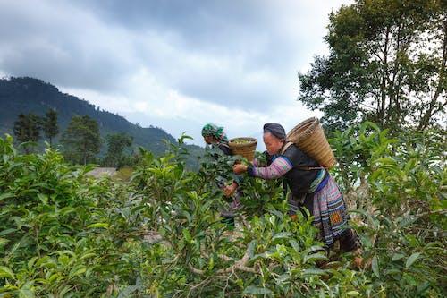 下田, 亞洲女人, 人, 國家 的 免費圖庫相片