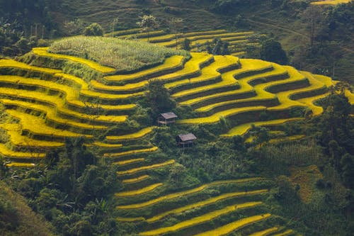 Green Stair Rice Field