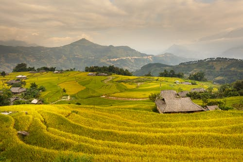 Photo Of Rice Terraces During Daytime