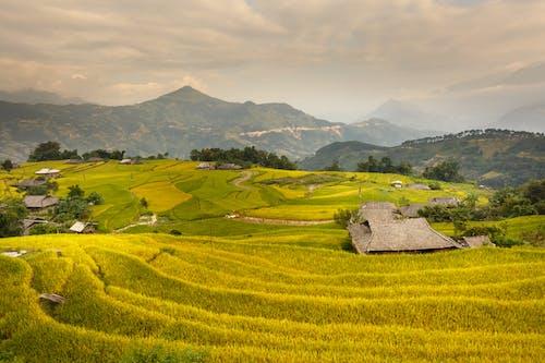Gratis stockfoto met akkerland, akkers, bergen, boerderij