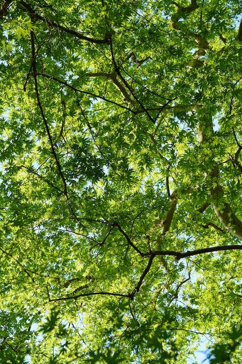 Ilmainen kuvapankkikuva tunnisteilla auringonvalo, kasvu, kirkas, lähikuva