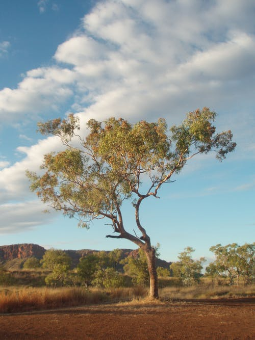 Free stock photo of landscape, outback, sky