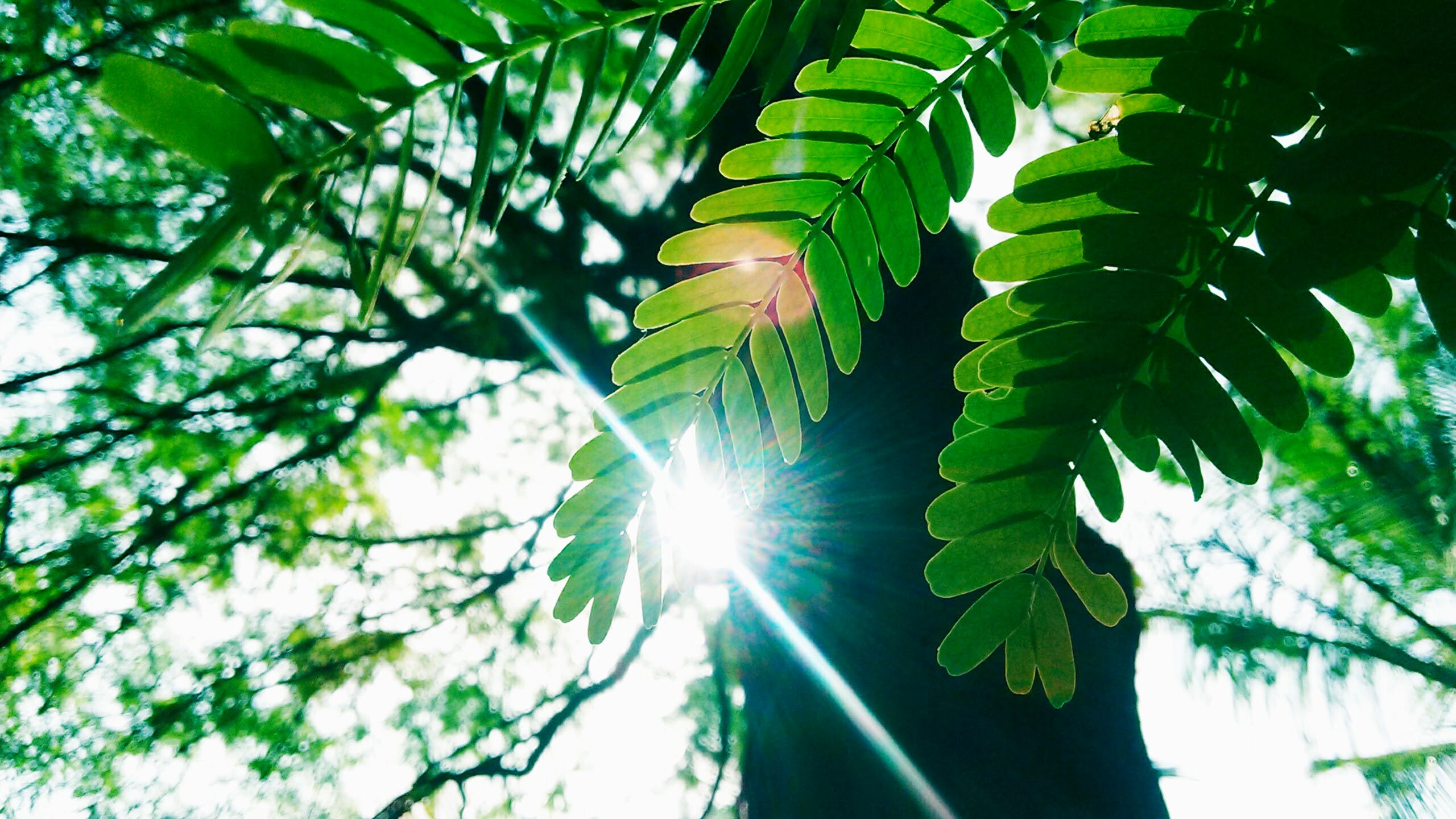 Low Angle Photography of Green Leaves Plant With Tall Forest Tree