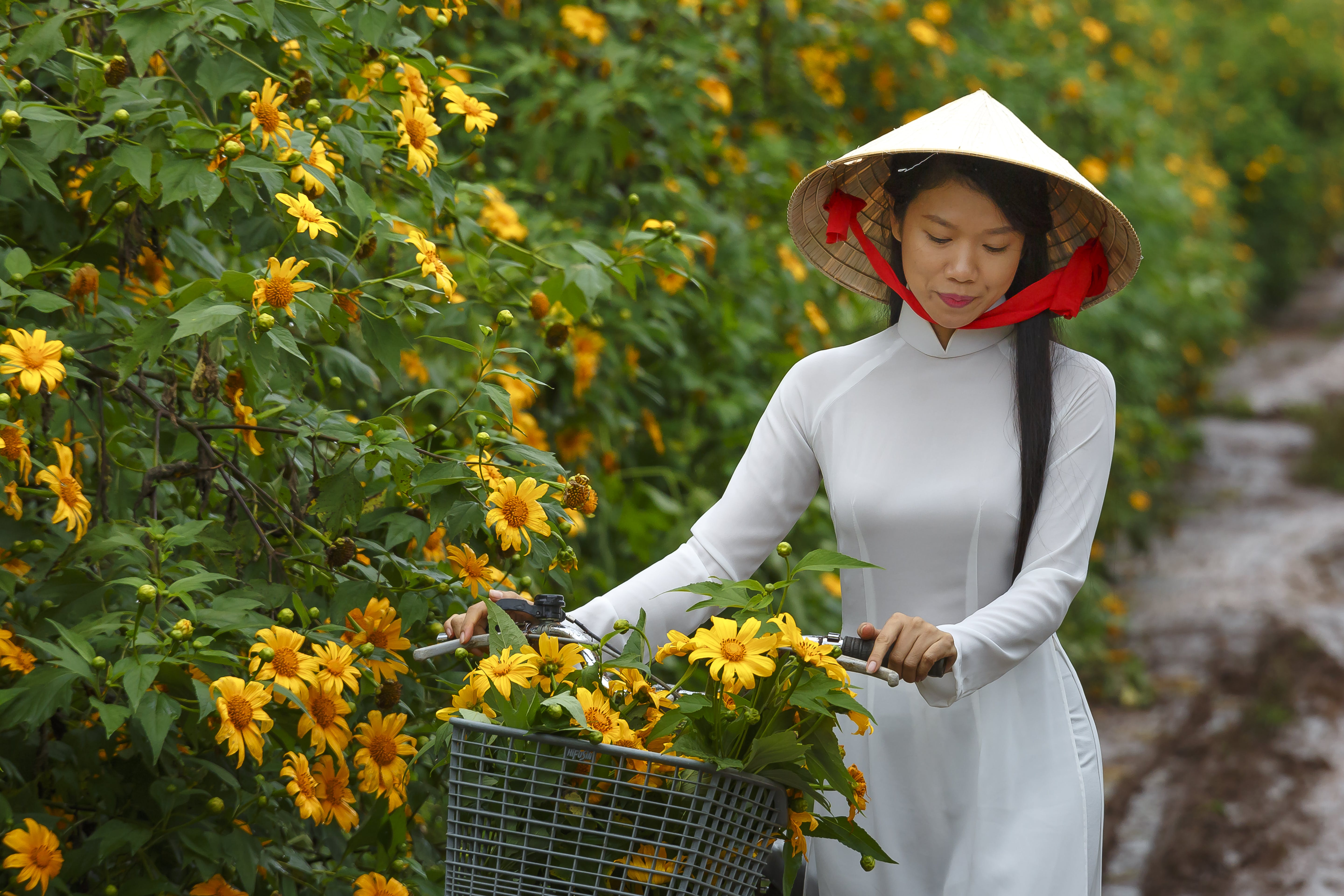Woman in Brown Cone Hat and White Long-sleeved Dress Holding Bike Handle Near Yellow Flowers